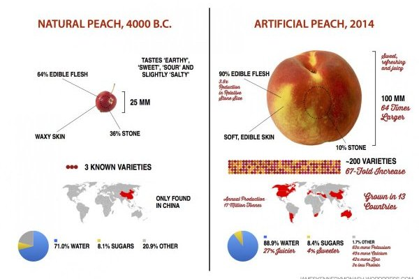 Are you Toxic? Join the 9 day detox | Peaches today are 64x larger, 27% juicier & 4% sweeter than their ancestors-  #biotech #peach  Are you toxic? Take the Quiz ->