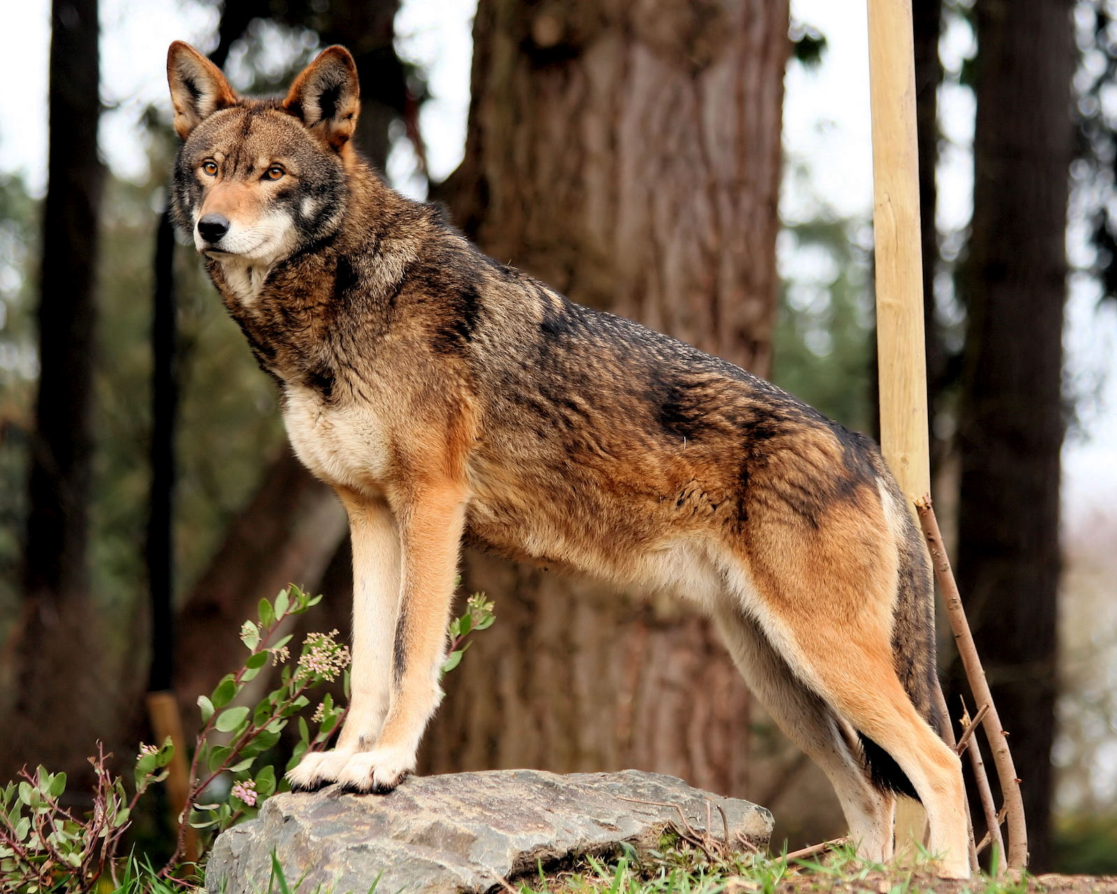 At the other extreme is the boreal forest. Deciduous Forests Animals