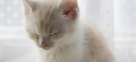 Daily Dose Of Cute Kitten Tries To Stay Awake But Face-Plants Into Dreamland [VIDEO]