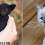 30 Adorable Felting Wool Toys That Look Like Real Animals