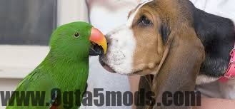 Can Dogs and Birds Live Together Safely?