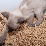 Cat Litter Which Type Should You Get For Your Cat
