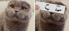 Guy Puts Funny Face Cutouts Over His Cats To Make Them Look Hilariously Emotional