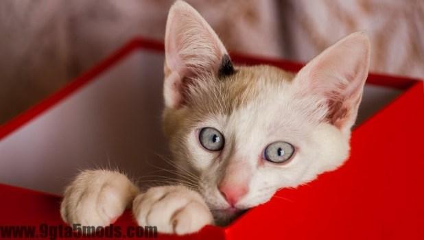 Schrödinger's Cat: What Is It? What Does It Mean?