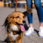Tips to Get Out With Your Older Dog