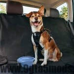Train Your Dog to Get Into and Out of the Car Safely