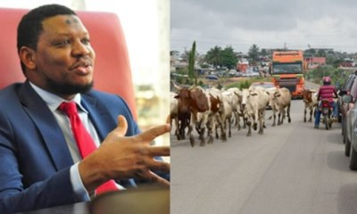 """""""it's senseless for cows to be roaming the streets in 2021"""" – Adamu Garba"""