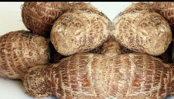 Uses of Cocoyam Leaves and Health Benefits