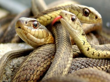 Drama As Smugglers Of Imported Snakes Disappear From Custody