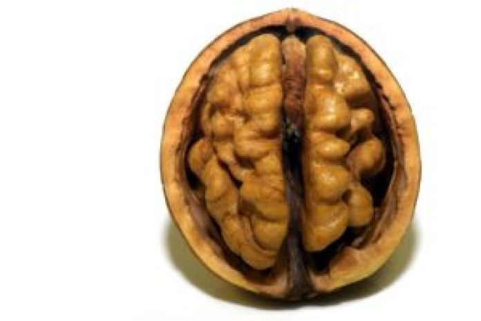 Foods to Boost Your Brain and Memory