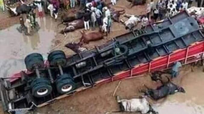 "Trailer loaded with Fulani cows, goats and ""Almajiris"" heading to the South East fell at the Lokoja Bridge killing many"