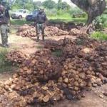 Imo rubber farmers