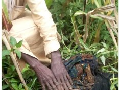 GrandPa Buried Newborn Grandchild Alive in Nigeria (Graphic Photo)