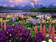 The beauty of God - Beautiful flowers show the beauty of God