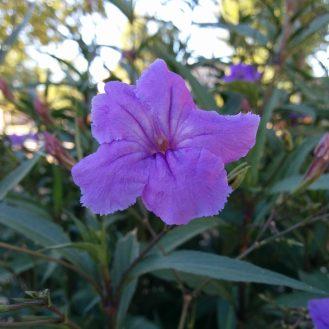 5-flower