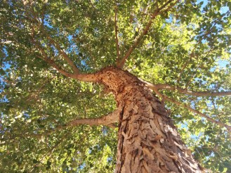 5-tree