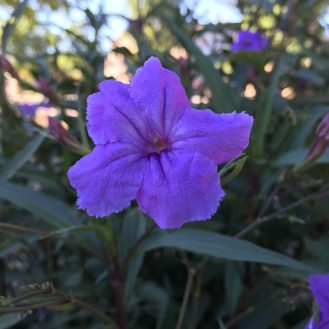 iphone-flower