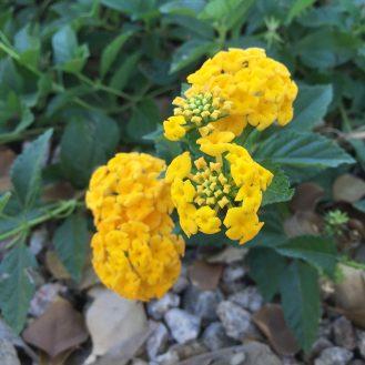 iphone-yellow