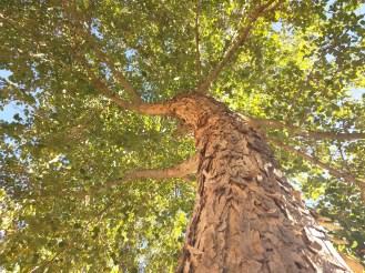 nex-tree