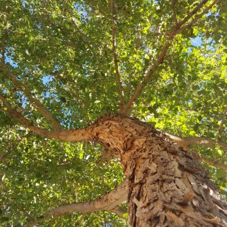 note-tree