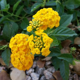 note-yellow