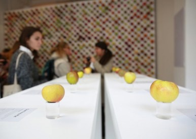 the-real-apple-store-05