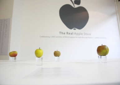 the-real-apple-store-06