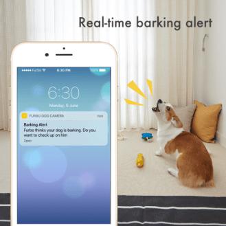 barking_1024x1024_10c6c260-463e-48f8-b453-cd0205af386a_1024x1024