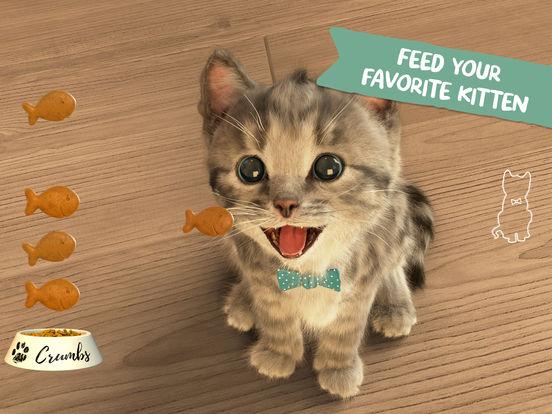 Little Kitten- My Favorite Cat-3