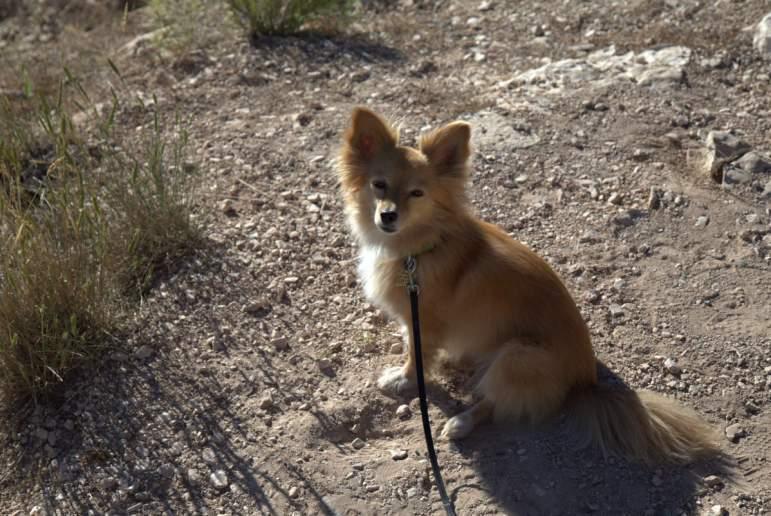 J.T. the desert dog