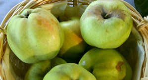 Calville blanc apples