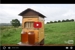 Honey literally flows from this hive.