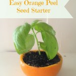 Easy DIY Orange Peel Seed Starter