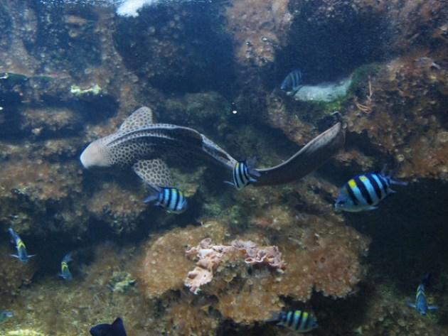 Aquarium in Paris