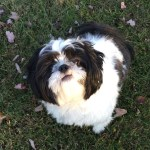 Pinnacle grain free LID quality ingredients dog food