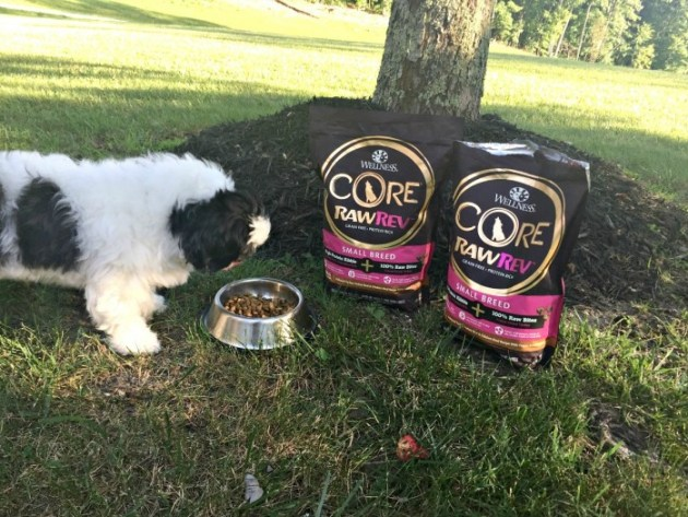 Ways to keep your dog safe this summer, by providing balanced nutrition with RawRev dog food...