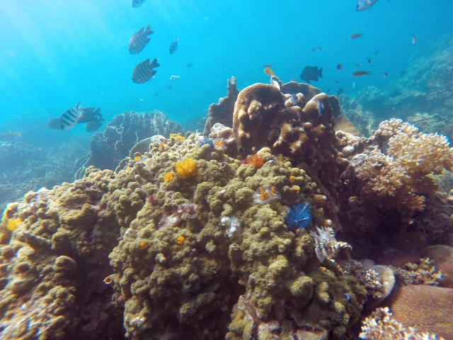 Scuba Diving in Koh Lanta