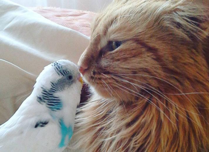 Wellenförmiger Papagei und Katze