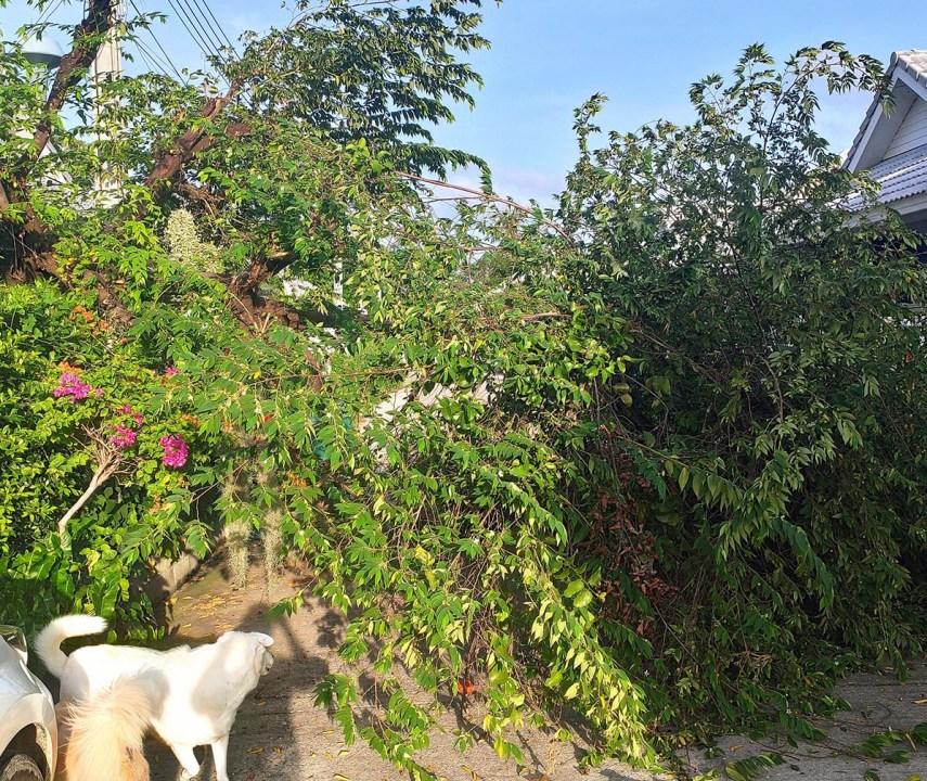 Вот тебе и доброе утро: ночью упало дерево