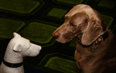 A canine guest meets a dog statue