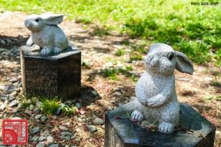 2012 Izumo Grand Shrine rabbits