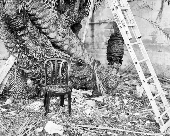 Chair and palm tree. Lulavim. About a Alm Tree. #Sukkot