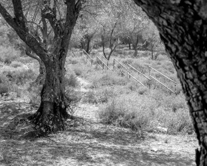 Forest near the shrine of Rabbi Jonathan ben Uzziel
