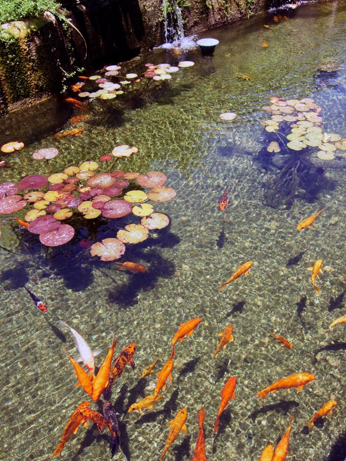 Goldfish in Tel Aviv