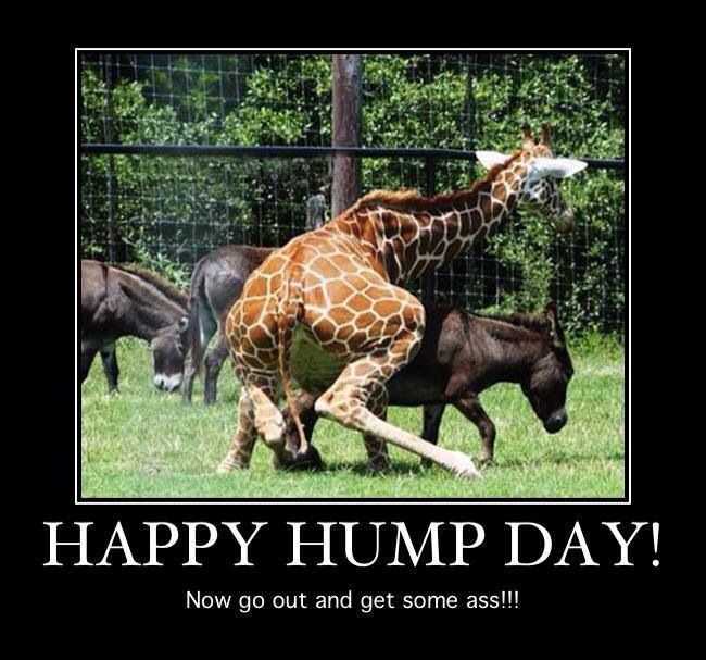Happy Hump Day Weird
