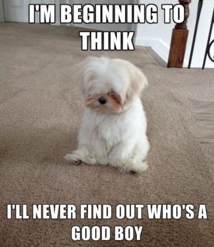 Who's A Good Boy? funny animal image