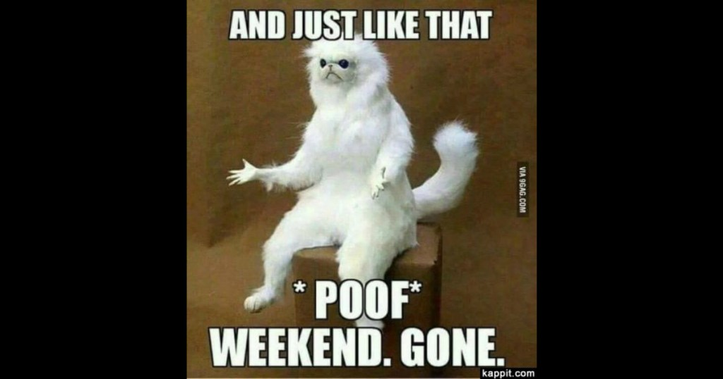 Weekend Gone image of cat and poof