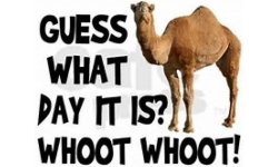 What day is it - Wednesday - Hump Day