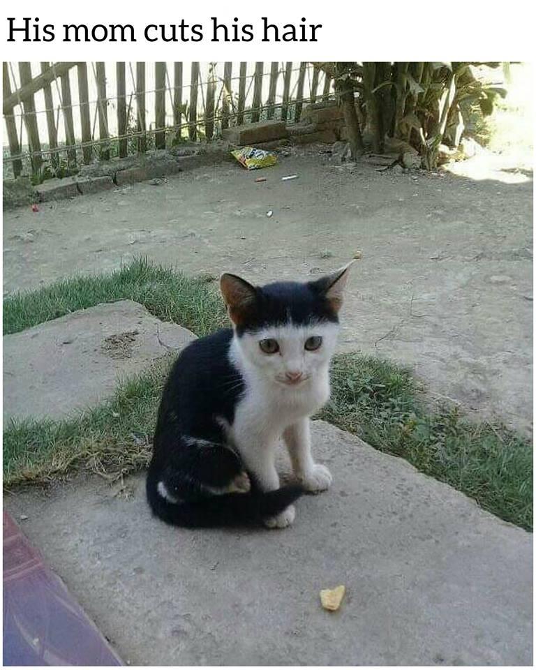 His Mom Cuts His Hair Cat