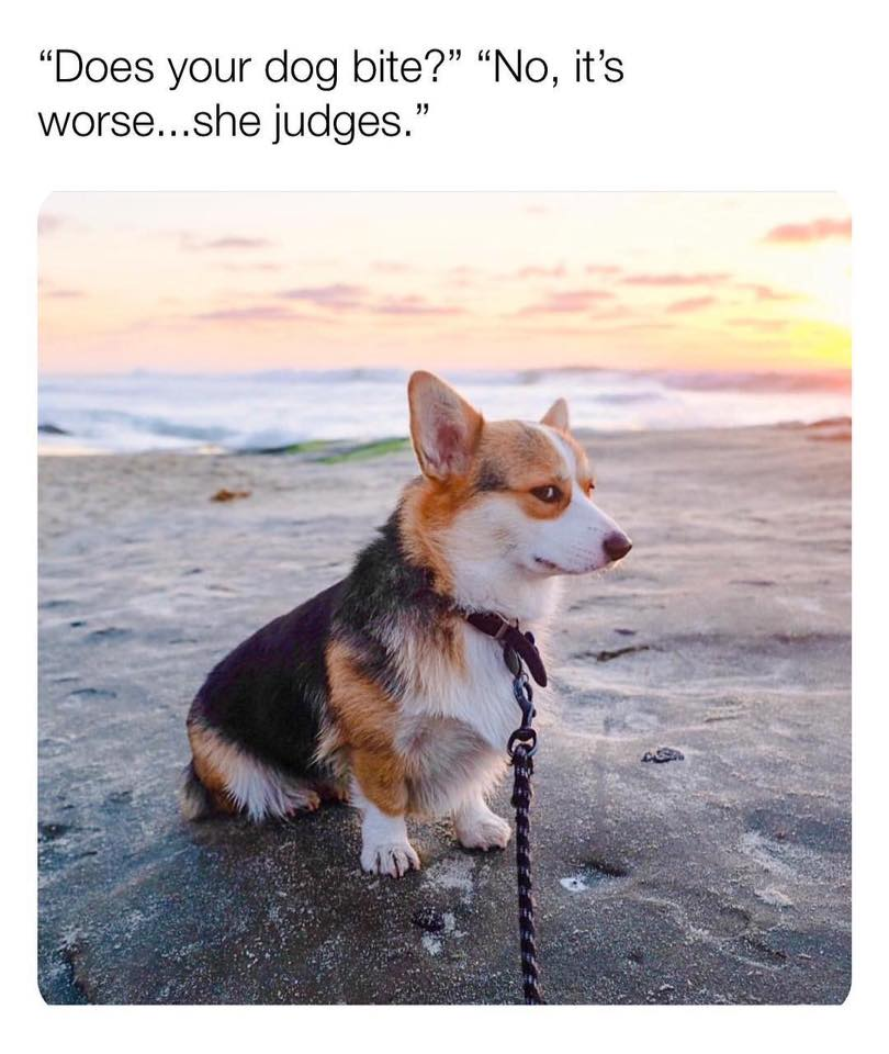 Judgmental Dog